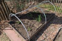 Seedlings planted